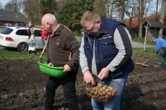 Kartoffeln_pflanzen_2015_KartoffelpflanzenIMG_7443